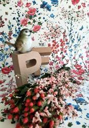 Petite Fleur 5